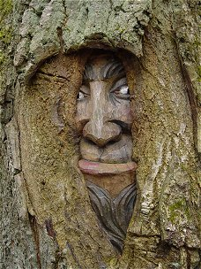 Carved out face partly overgrown with bark